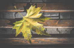 Autumn leaf on sidewalk. Dark background Royalty Free Stock Photography