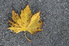 Autumn leaf on sidewalk. Dark background Royalty Free Stock Photo