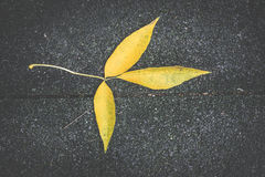 Autumn leaf on sidewalk. Stock Photography