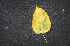 Autumn leaf on sidewalk. Stock Photos