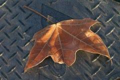 Autumn Leaf Stock Photography