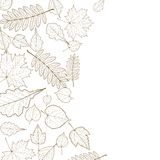 Autumn leaf skeletons template. Stock Images