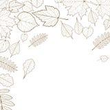 Autumn leaf skeletons template. vector illustration