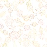 Autumn leaf skeletons template. Royalty Free Stock Images