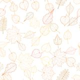 Autumn leaf skeletons template. Royalty Free Stock Image