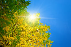 Autumn leaf in sky. Royalty Free Stock Images