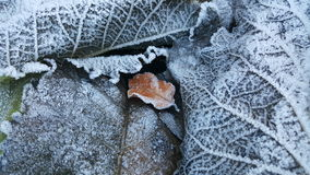 Frozen leaf  Stock Image