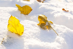 Autumn leaf on snow Royalty Free Stock Photos