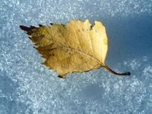 Autumn leaf on snow.  Royalty Free Stock Image
