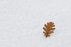 Autumn leaf on snow Stock Images
