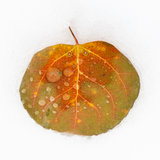 Autumn Leaf on Snow Royalty Free Stock Photography