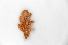 Autumn leaf on snow Stock Photo
