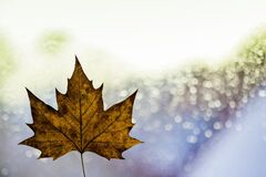 Autumn leaf and sparkling background Royalty Free Stock Photo