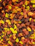 Autumn leaf sprinkles. Autumn leaf baking sprinkles royalty free stock photos