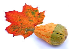 Autumn leaf and squash Royalty Free Stock Images