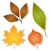 Autumn leaf sticker set Stock Images