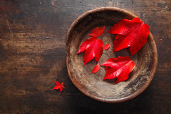 Autumn leaf still life Stock Photos