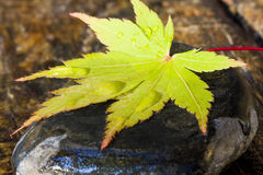Autumn leaf on stone Royalty Free Stock Images