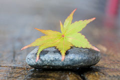 Autumn leaf on stone Stock Photo