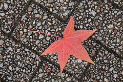 Autumn leaf on the stone floor Royalty Free Stock Images