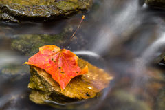 Autumn Leaf in Stream Royalty Free Stock Photos