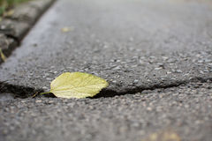 Autumn Leaf on a street Royalty Free Stock Photo