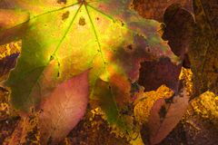 Autumn leaf structure in the Cairngorms of Scotland Stock Images