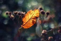 Autumn leaf in the sun Stock Photography