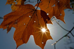 Autumn leaf with sunstar Royalty Free Stock Photography
