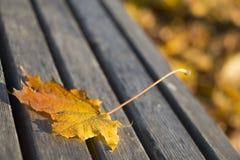 Autumn Leaf sur un jaune de parc de banc Photographie stock