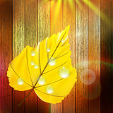 Autumn Leaf template. plus EPS10 Royalty Free Stock Photos
