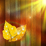 Autumn Leaf template. plus EPS10 Royalty Free Stock Images