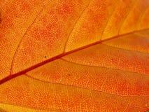 Autumn leaf texture. Detail of the autumn leaf texture Stock Image