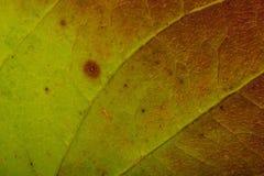 Autumn leaf texture Stock Photos