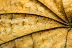 Autumn Leaf Texture Royaltyfri Bild
