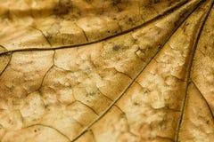 Autumn Leaf Texture Fotografía de archivo libre de regalías