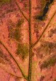 Autumn Leaf Texture Foto de archivo