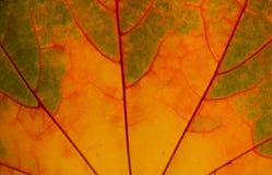 Autumn Leaf Texture Fotografía de archivo
