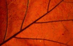Autumn Leaf Texture Imagen de archivo libre de regalías