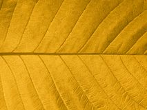 Autumn leaf texture. Close-up of a yellow autumn leaf in backlight Stock Photo