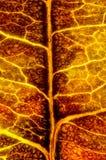 Autumn Leaf Texture Stock Afbeelding