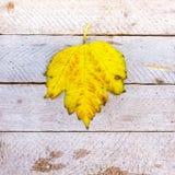 Autumn leaf texture background Royalty Free Stock Photos