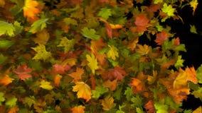 autumn leaf transition
