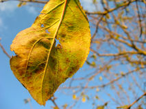 Autumn leaf on a tree Stock Photography