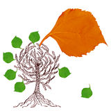 Autumn leaf and tree Royalty Free Stock Photos