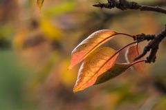 Autumn leaf on tree royalty free stock images