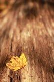 Autumn leaf on tree bark Royalty Free Stock Photography