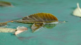 Autumn leaf of a tree lying in the water nature stock video footage