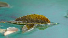 Autumn leaf of tree lying in the water nature stock video