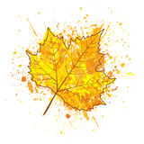 Autumn leaf of a tree and paint splashes, drops, blot. A autumn leaf of a tree and paint splashes, drops, blot  for design Royalty Free Stock Image